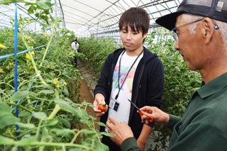 トマト収穫体験.jpg